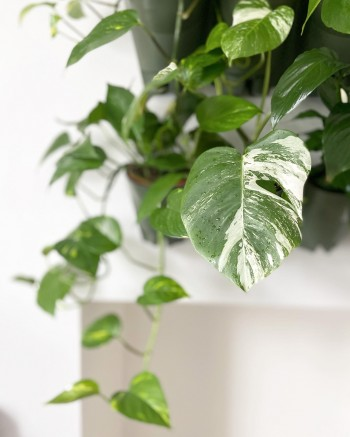 Can house plants increase your productivity?
